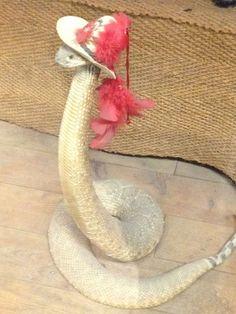 Cobras entram na moda com esses chapéus.