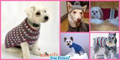 Dog Sweater - Free Patterns With the holidays so close and everyone excited, don't leave your dog out on the fun! Why not make him a Crocheted Dog Sweater for a great Christmas Crochet Dog Sweater Free Pattern, Crochet Poncho Patterns, Crochet Cardigan, Knitting Patterns, Dachshund Sweater, Dog Sweaters, Dog Beanie, Christmas Crochet Blanket, Swedish Weaving Patterns