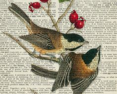 Chickadees   vintage bird artwork  printed on page by FauxKiss, $12.00