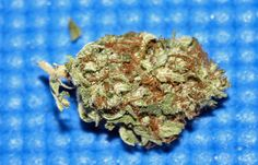 Master-Kush is so damn powerful for pain relief