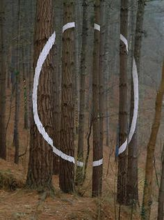 The Forest of Oma, Basque Country | Spain       The forest of Oma, one of Basque artist Agustín Ibarrola's