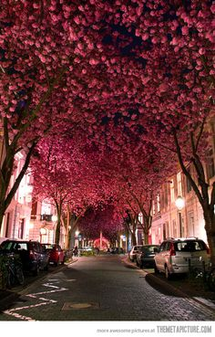 Cherry Blossom Avenue.  It's hard to believe that places like this exist in real-life, but they do! This gorgeous street scene, in Bonn, Germany, shows beautiful cherry blossoms in full bloom. 20-year-old landcape photographer Marcel Bednarz caught this image earlier this year with his Nikon D3000. Bednarz says that there are only two to three weeks when these trees are at this beautiful stage of blossoming. Stunning!