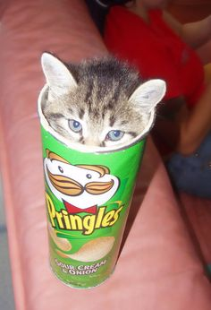 cats really are like potato chips...one just isnt enough