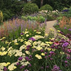 """307 Likes, 16 Comments - Ashley Awramenko (@sassafras_gardens) on Instagram: """"I've planted Achillea before. It was Moonpagoda and a beautiful subtle yellow like this one. But…"""""""