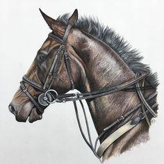 #art #illustration #drawing #draw #equine #picture #artist #sketch #sketchbook #petportrait #pastelpencil #pencil #artsy #instaart #beautiful #instagood #gallery #masterpiece #creative #photooftheday #instaartist #graphic #graphics #artoftheday#horseart10 #horse #equineart