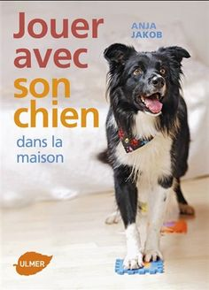 Présentation d'idées faciles à mettre en place pour jouer avec son chien en intérieur : jeux d'intelligence, tours d'adresse... Working Cocker, Working Dogs, Dog School, Wood Dog, Dog Games, Baby Dogs, Jouer, Beautiful Dogs, Border Collie