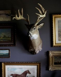 dark gallery wall, light prints on dark wall, metallic details, gold details, mounted buck Dark Walls, Blue Walls, Animal Heads, My Animal, Charcoal Walls, Deer Mounts, Deer Family, Man Room, Oh Deer