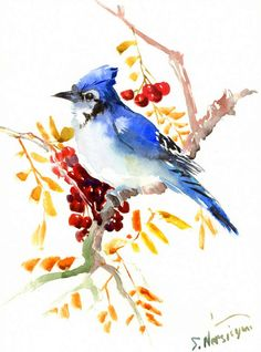 Blue Jay and Rowen,  original watercolor painting, 12 X 9 in, blue red yellow walla rt, bird wall art, bird painting