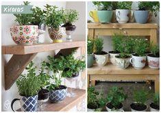 5 ideias para fazer horta em casa