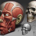 Skull020614