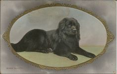 NEWFOUNDLAND REAL PHOTOGRAPHIC DOG POSTCARD