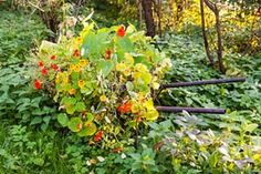 How to rewild your garden (article from The Guardian)
