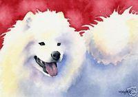 SAMOYED Dog Painting ART 11 X 14 LARGE Print Signed DJR