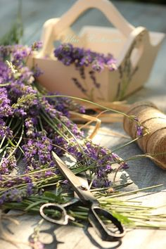 Gypsy Purple home. Lavender Cottage, Lavender Green, French Lavender, Lavender Fields, Lavender Flowers, Purple Flowers, Lavender Crafts, Lavenders Blue Dilly Dilly, Deco Nature