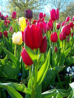 ... Wall Art Decor, Rose, Artwork, Flowers, Plants, Painting, Netherlands, Inspiration, Image