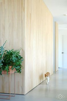 Home Decoration For Birthday Party Plywood Interior, Plywood Walls, Wooden Walls, Wooden Wall Panels, Wall Wood, Interior Wall Colors, Interior Walls, Interior And Exterior, Inspiration Wand