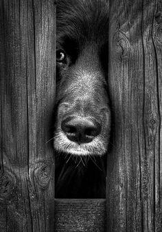 Don´t walk away ... by Udo Moelders~♛
