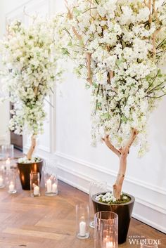 WedLuxe Magazine - The Global Authority on Luxury Weddings White Cherry Blossom, Cherry Blossom Wedding, Event Management, Event Decor, Corporate Events, Event Design, Wedding Decorations, Black White, Chic