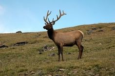 Colorado offers 8.4 million acres of BLM and 14.3 million acres of forest for public land hunting.