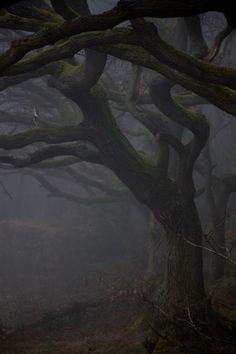 Le temps plus que parfait Misty Forest, Dark Forest, Samhain, Southern Gothic, Season Of The Witch, Mystique, Mists, Serenity, Woodland