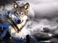alert wolf on a rocky plane