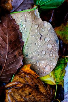 November Rain by Jim Crotty on 500px