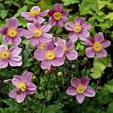 Image result for perennials bloom spring to fall