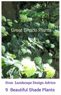 Choosing Plants for Your Shade Garden | Garden. | Pinterest | Plants on