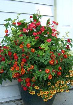 Container gardening   Sublime Garden Design   Award-winning Landscape Design & Architecture
