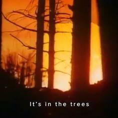 Roland Mouret Autumn Winter 2016: 'It's in the trees...' 2 days to go until the show #RolandMouretAW16 #inspiredby Source: Kate Bush - The Sensual World, 1989 #RolandMouret #pfw www.rolandmouret.com