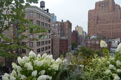 VIEWSDAY | Tribeca is in full bloom.