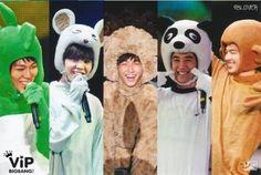 Big Bang as furry animals Daesung, Vip Bigbang, Choi Seung Hyun, Yg Entertainment, Baby Baby, Sung Lee, Cute Bangs, Big Bang Kpop, Bang Bang