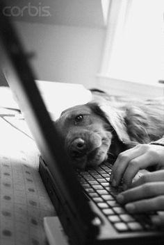 reminds me of my dog. lol He's so jealous of the computer, when it's in my lap.