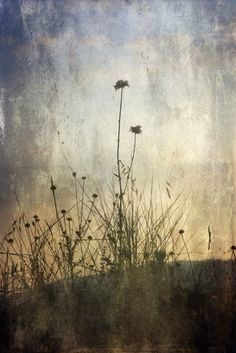 Romantic Nature © Chiara Vignudelli