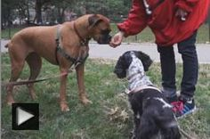 Becky, The Noble Therapy Dog and Olive, The Big Kisser.