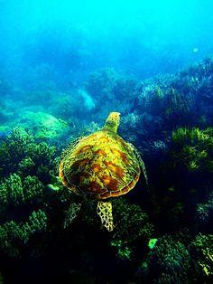 壮大な海の野原を駆ける海亀