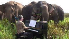 HEART-WARMING STORY: British man drags piano to top of mountain to serenade BLIND ELEPHANTS.   Elephants never forget, according to the saying – and these will always remember when Paul Barton serenaded them with Beethoven (who was deaf).