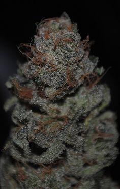 Frosty the Bud