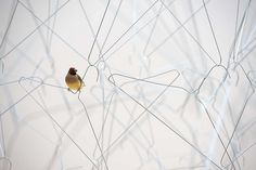 'From here to ear (v. 13)' installation by Celeste Boursier-Mougenot