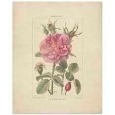 "Kavka Rose by Terri Ellis Graphic Art Size: 14"" H x 11"" W x 0.01"" D"