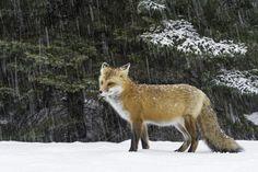 It's raining snow... by Daniel Parent on 500px