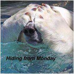 Oh my god, again Monday :(