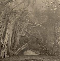 El portal, en la lente de Paul Kozal.