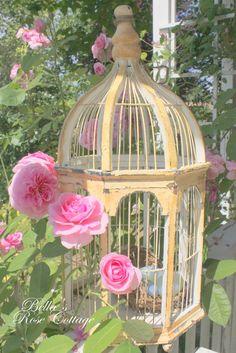 bird cage in rose garden