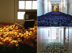 Anna Schuleit's Bloom installation at the  Massachusetts Mental Health Center