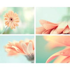 Spring Decor, Peach And Mint, Spring Photography Set Print, Mint,... (260 PLN) ❤ liked on Polyvore featuring backgrounds, pictures, flowers, photos, pics and fillers