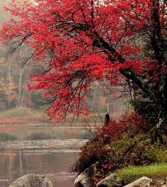 Fall Lake in Otis, Massachusetts Great Pictures, Beautiful Pictures, Beautiful World, Beautiful Places, Autumn Scenes, All Nature, Autumn Photography, The Great Outdoors, Wonders Of The World