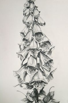 how to draw foxgloves - Google Search
