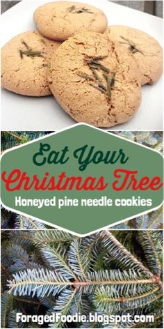 Eat your Christmas tree! Make these Honeyed spruce (or pine) needle cookies, from the ForagedFoodie.
