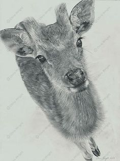Fallow Deer Fawn - Painting Art by Chris Wright